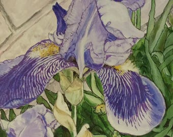 """Iris, beautiful 12""""x12"""" acrylic painting on gallery wrapped canvas with image continuing on all sides."""