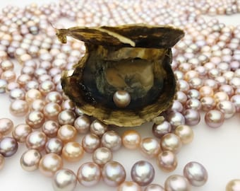 Bulk Pearl Oysters, 2.50 each, WHOLESALE, Oval or Round pearls, pearl oysters, Natural  Color, wish pearl, oyster in pearl.