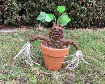 Mandrake Alraune Root Pflanze