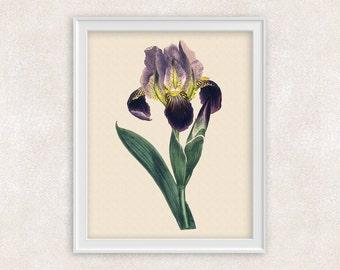 Iris Botanical Print - Purple Flower Art - 8x10 PRINT - Wall Art Prints - Antique Prints - Home Decor - Botanical Art Print -  Item #138