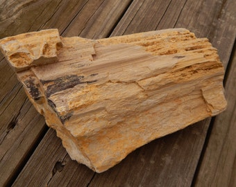 Genuine ROUGH PETRIFIED WOOD Specimen Stone - Over Three Pounds! - Beautiful Wood Grain Detail - Fossils - Crystals - Gemstone Collections