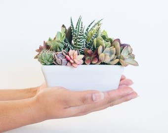Succulent gift succulent gift box office succulents sympathy gift for friend birthday succulents Mothers Day arrangement Thank you gift box