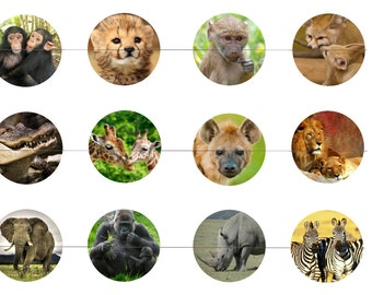 "African Animals 1"" Inch Bottle Cap Images Digital Download - 12 images for a 4 x 6 Sheet Size Lions, Chimpanzee, Zebras, Elephant"