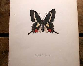 Vintage Red and Black Butterfly Botanical Print - Eurytites lysithous