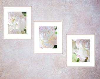 Three Peony Photographs,  Flower Print Set, Flower Photography, Romantic Wall Decor