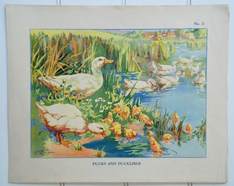 Enid Blyton vintage 1930s school poster - Ducks and ducklings, nature poster