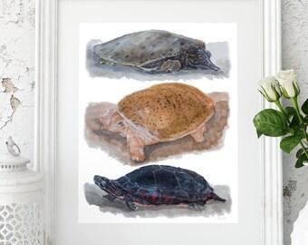 Tennessee Warner Park Set 2 Turtle Trio Fine Art Print from an original watercolor painting by artist Joy Neasley
