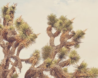 Joshua Tree print, desert picture, boho wall art, southwestern decor, yucca tree photograph, Palm Springs, green, brown, botanical photo