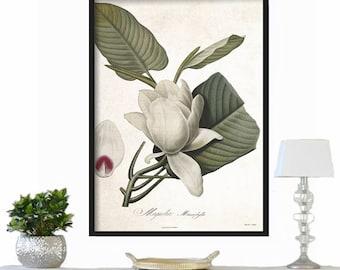 Farmhouse Decor - Magnolia Botanical Print - Large Print - Vintage Print - Rustic Decor - Wall Art Print - Vintage Botanical Print - Print