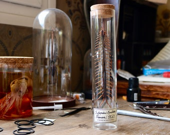 Centipede giant centipede of Indonesia tube conservation glass Cork for Scolopendra morsitans curio cabinet
