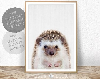 Hedgehog Print, Woodland Animal Wall Art, Nursery Decor, Peekaboo Animal, Shipped Print, Large Poster, Baby Room Art Print