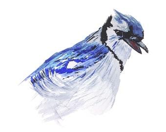 Blue Jay Singing