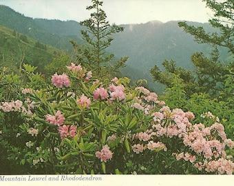 Vintage 1980s Postcard Tennessee Great Smoky Mountain National Park Mountain Laurel Rhododendron Alum Bluff Photochrome Era Postally Unused