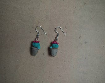 "Earrings cactus, houseplant, ""Echinopsis pachanoi"""