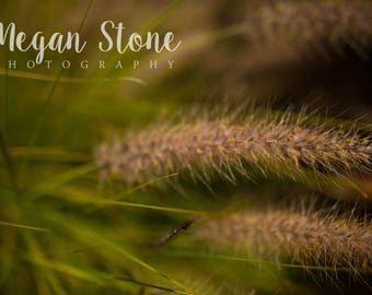 Plant - Digital Download
