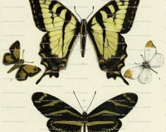 Butterflies Collage Sheet Instant Digital Download