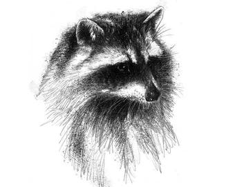 Racoon | Limited edition fine art print from original drawing. Free shipping.