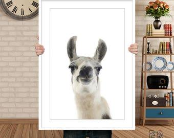 Llama Print, Alpaca Print, Llama Wall Art, Nursery Animal Print, Nursery Decor, Llama Poster, Alpaca Poster, Llama Photo, Llama Decor, Llama