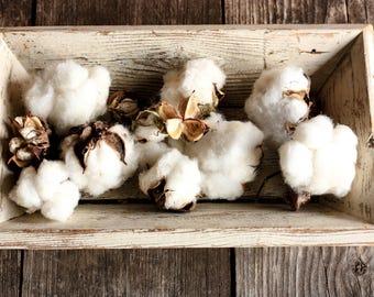 12 Real Cotton Bolls, Cotton Balls, Cotton Blossom, Country Wedding Decor, Cotton Centerpiece, Cotton Stalks, Dried Cotton, Cotton Bundle