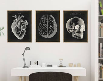 Anatomy Print SET of 3, Anatomical Poster on black, Skull Print, Heart Print, Brain Chart, Medical Print, Anatomy Chart, Antique Anatomy