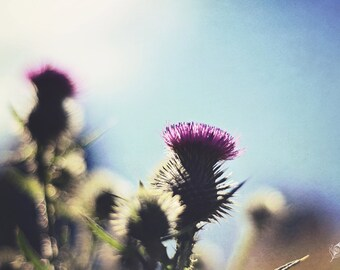 Eye of the Beholder, thistle, beautiful weed, fine art print, wall art, photo, photograph