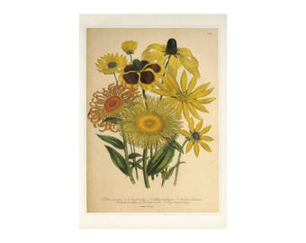 Jane Loudon Yellow Flowers Book Plate SALE~~Buy 3, get 1 Free