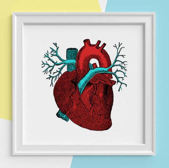Red heart art Print Human anatomy print, Science student gift- Human heart Doctors office gift, Future doctor gift SKA057SQ1