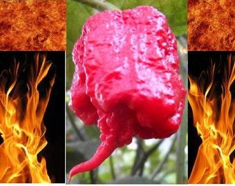 10 Carolina Reaper seeds HP22B Worlds Hottest pepper Guinness world records EXTREME HEAT!!