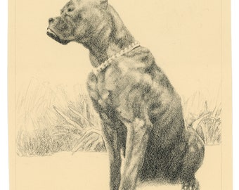 Charcoal drawing, Dog art, Dog portrait, Vintage art, Boxer, Animal art, Fine art print- Bismarck: Study in Charcoal #3