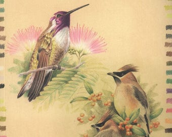 Drawing Birds with Colored Pencils - PDF ebook - Drawing ebook -  instant download Digital book