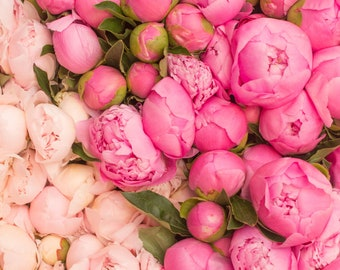 Paris Photography, Paris Peony Season, Pink Hues, Market in Paris, Pink Wall Art, French Print, Peony in France