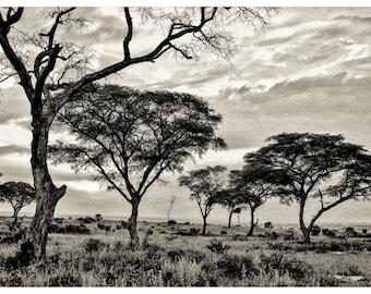 African safari, framed photo, wall art, photography prints,