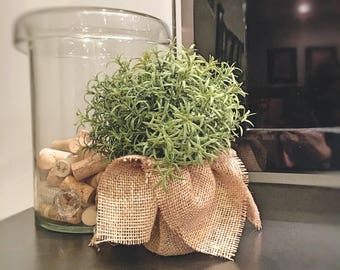 PERFECT PLANT   Fake   One (1) Artificial Potted Plant; Planter decoration; Fake plant