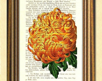 CHRYSANTHEMUM - Dictionary Art Print -  Botanical Art - Antique Upcycled Book Page