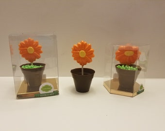 Blooming Flower in Chocolate Pot