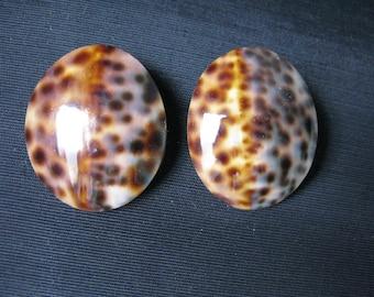 Shell Jewelry Earrings Tortoise shell earrings, Real Seashells, Pierced Earrings, Vintage Beach Wedding Sea Shell