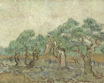 Van Gogh : The Olive Orchard (1889) Canvas Gallery Wrapped Giclee Wall Art Print (D45)