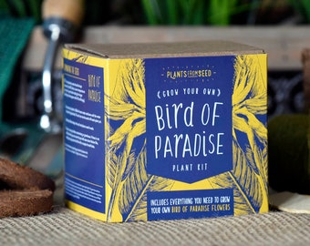 ECO Grow Your Own Bird Of Paradise Plant Kit