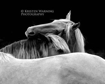 Horse Photos, Horses, Black and White, Photography, Equine Art, Equines, Herd Hug