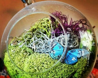 Rope Hanging Glass Globe Terrarium with Living Air Plant