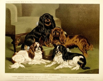 TOY SPANIEL ANTIQUE Chromolithograph Dog Print 1881 Vero Shaw Cassells and Company Unique Christmas  Birthday Thanksgiving dog lover gift