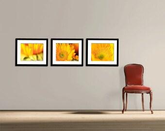 Flower Photography - Set of Three (3) Sunflower Photographs - Sunflowers - Flowers - Fall - Fine Art Photography Prints - Yellow Home Decor