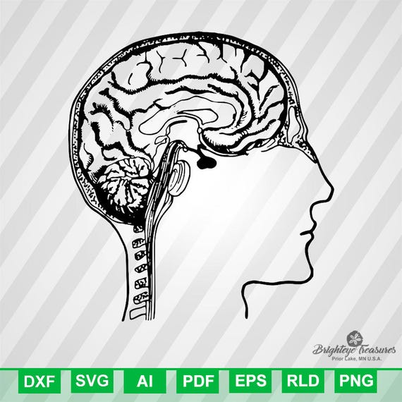 Brain diagram dxf svg ai pdf eps rld rdworks png ccuart Choice Image