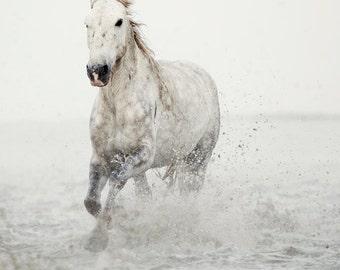 "Horse Print, Large Wall Art Print, White Horse Photography Print, Nature Photography, Minimalist Art, Modern Wall Decor ""Wild at Heart"""