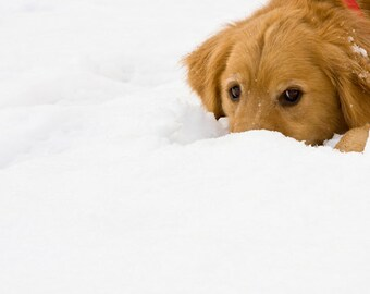 Set of Snowy Golden Retriever Dog Photo Cards, Blank or Holiday