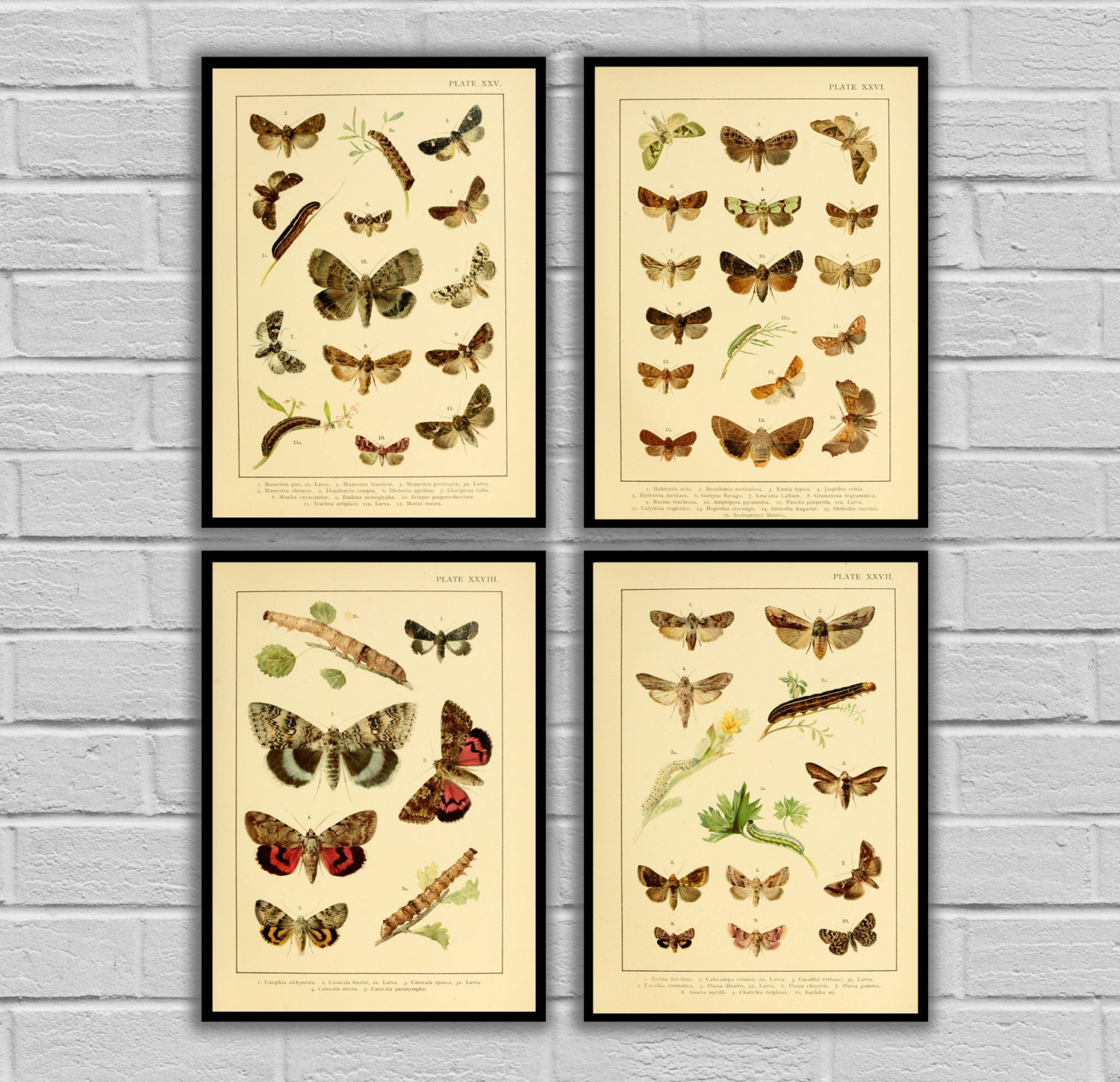 Vintage Moths and Caterpillars Set of 4 Print or Canvas