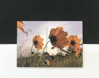 Photographic greeting card, floral card, yellow flower card, macro photography card (card #48)