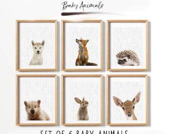 70% set of 6 baby animals, printable baby animals, nursery poster, nursery print, animals poster, animals print, animals printable, nursery