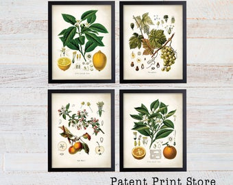Fruit Botanical Art Prints. Fruit Print. Fruit Wall Art. Botanical Print. Botanical Illustration. Botanical Wall Art. Farmhouse Decor. (123)