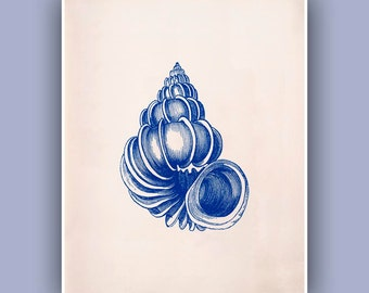 Seashell  Print,  Wentletrap sea shell print, Blue print,  Marine Wall Decor, Nautical art,  Seashore  Print, Botanical Art